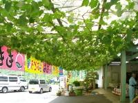輸入住宅 外観 甲府の家 (5).JPG