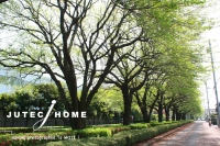 東京都日野市 神明の家 北欧住宅 木の窓 (7).jpg