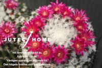 サボテンの花 (2).jpg
