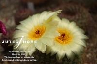 サボテンの花 (3).jpg