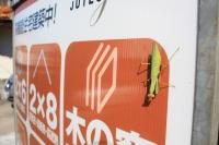 北欧の建物 神奈川県横浜市神奈川区 スウェーデン製の窓の家 (6).jpg