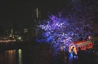 夜桜 (1).JPG