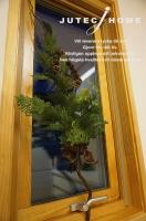 北欧輸入住宅 クリスマス 2013 (2).JPG